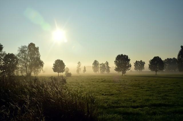 Campo agrícola con árboles.