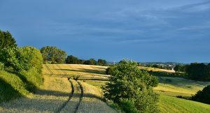 Campos con árboles. Foto: Pixabay/RitaE